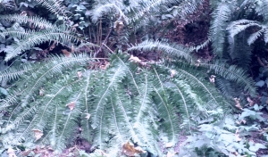 Fern leaves spread out along the forest floor.